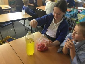 Year 6 become scientists